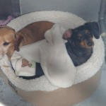 Ginger Snap and Oreo Dykes