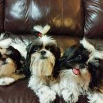 Terri's Clan - Molly, ShyAnne & Chula