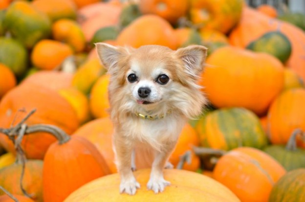 dog-in-pumpkin-patch-770x510