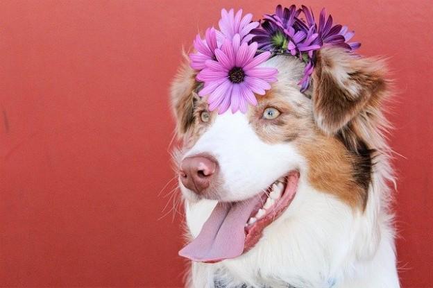 flower pup